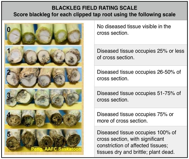 Blackleg chart
